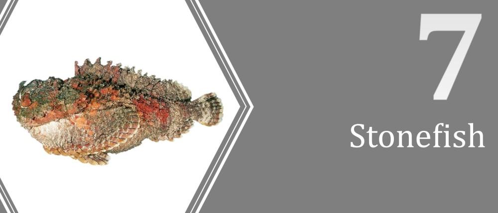 7 (Stonefish)